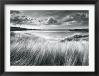 Framed Sea Grass