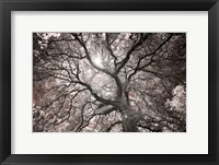 Framed Ethereal Tree