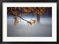 Framed Fog Leaf