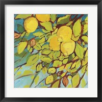 Framed Lemons Above