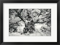 Framed Portrait of a Tree, Study 1