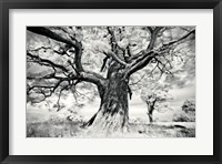 Framed Portrait of a Tree, Study 2