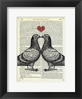 Framed Pigeons in Love