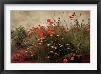 Framed Poppy Garden