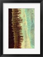 Framed Lichen I