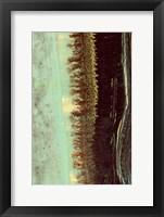 Framed Lichen II