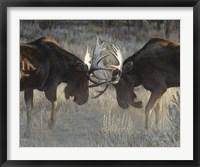Framed Moose Challenge