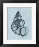 Wentletrap Shell (light blue) Framed Print
