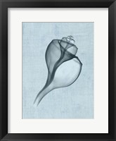 Channelled Whelk (light blue) Framed Print