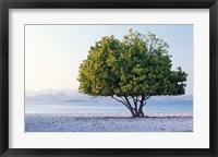 Framed Asia, Indonesia, Lesser Sunda Archipelago, Beach