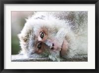 Framed Ubud, Bali, Indonesia, Sacred monkey forest