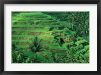 Framed Bali, Tegallalan, Rice Terrace