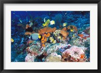 Framed Coral Reefs, Papua, Indonesia
