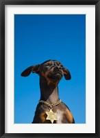 Framed Israel, Tel Aviv, Dog, Jewish Star of David medallion