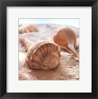 Framed Beachy Shell III