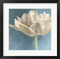 White Tulip I Framed Print