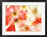 Framed Tulips 2