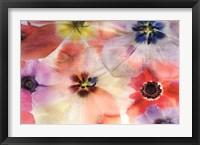 Framed Nature's Palette