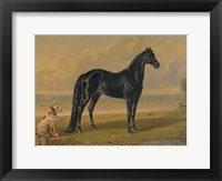 Framed America's Renowned Stallions, c. 1876 I
