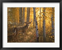 Framed Whitetail in Aspens