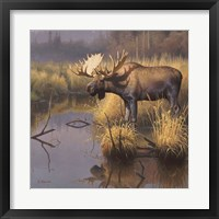 Framed Bull Moose