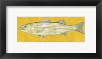 Framed Striped Bass