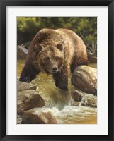 Framed Grizzly at Roaring Creek