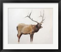 Framed Elk