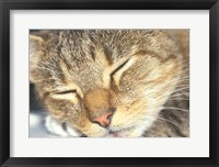 Framed Cat Sleeping