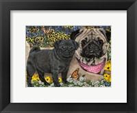 Framed Garden Pugs