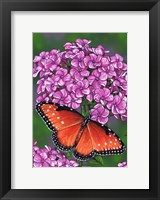 Framed Queen Butterfly