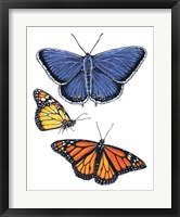 Framed Eastern Blue & Monarch Butterfly