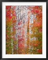 Framed Autumn Passage
