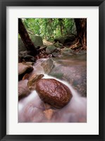 Framed Rainforest Stream, Bako National Park, Borneo, Malaysia