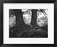Framed Mighty Oak