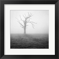 Framed Misty Weather II