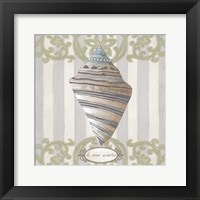 Riviera Shell II Framed Print