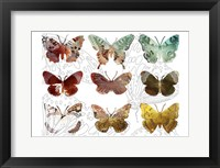 Layered Butterflies II Framed Print