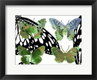 Layered Butterflies V Framed Print