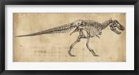 Tyrannosaurus Rex Study Framed Print