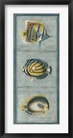 Tropical Fish Trio I Framed Print