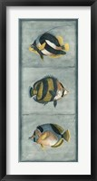 Tropical Fish Trio II Framed Print