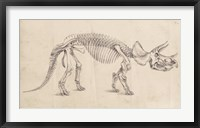 Dinosaur Study II Framed Print