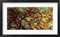 Entangle I Framed Print