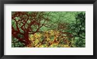 Entangle II Framed Print