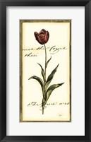 Jen's Tulip I Framed Print