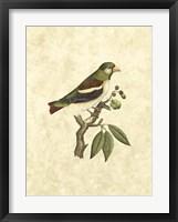 Framed Selby Birds V