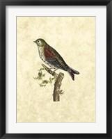 Framed Selby Birds VI
