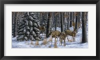 Winter Gathering Framed Print
