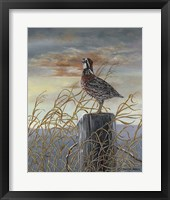 Framed Quail on a Post